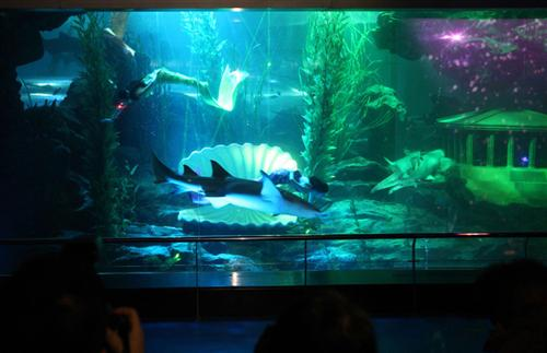 青岛海底世界美人鱼_美人鱼梦游海底世界-青岛西海岸新闻网