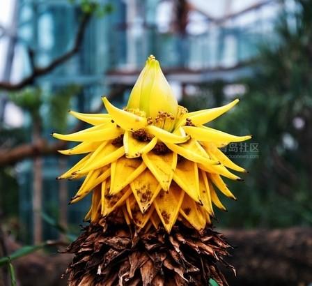 2014青岛世园会植物馆