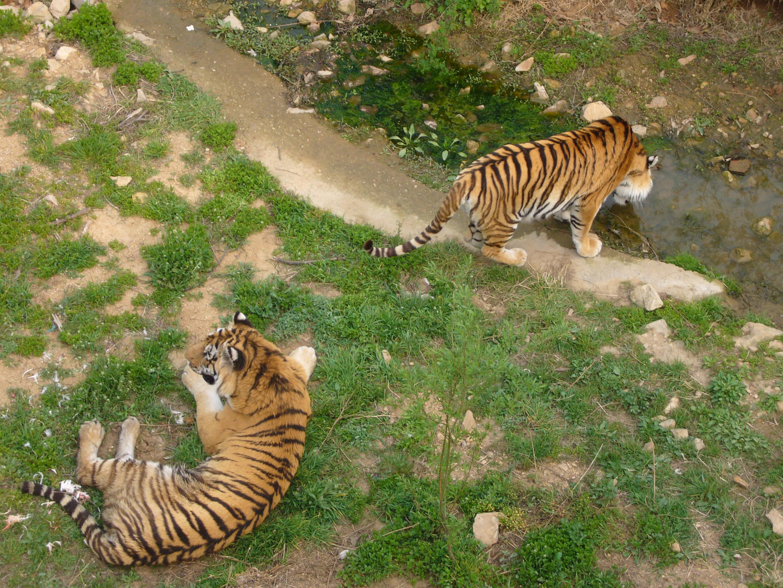胶南小珠山动物园-青岛西海岸新闻网