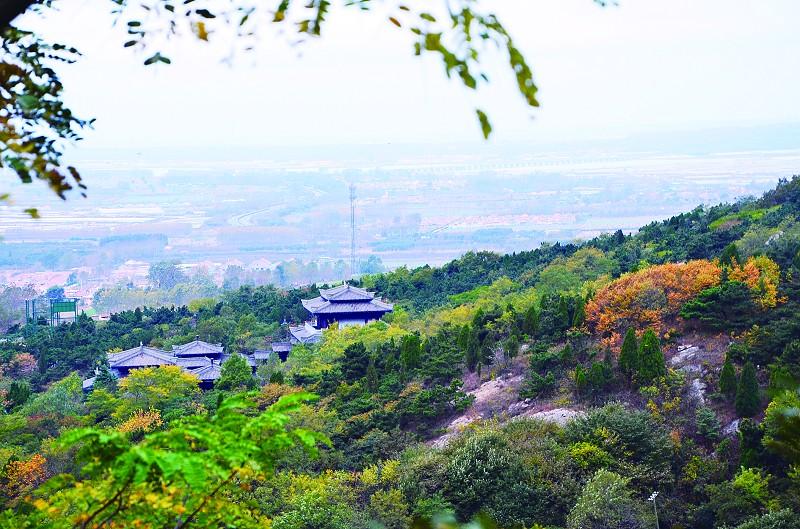 记者在琅琊台风景区看到,登山沿途,房前屋后,休息亭边,山林间,一片片