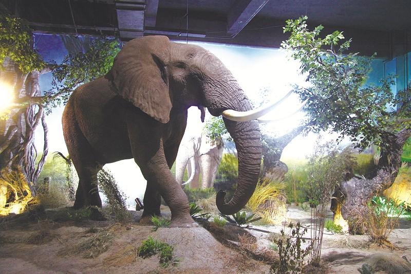 营造出形态各异的动物生存,成长环境:极地冰川,温带季风,热带雨林,稀