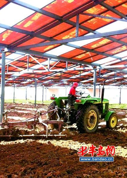 即墨太阳能小镇:棚顶发电棚底种菜-青岛西海岸新闻网