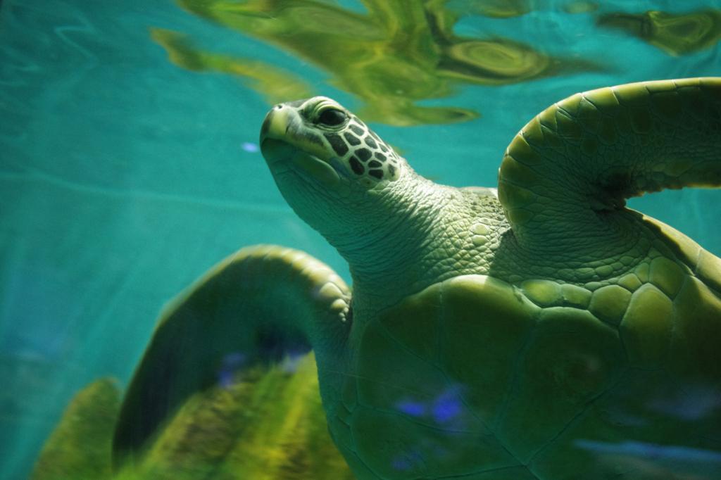 壁纸 动物 海底 海底世界 海洋馆 水族馆 鱼 鱼类 1024_682