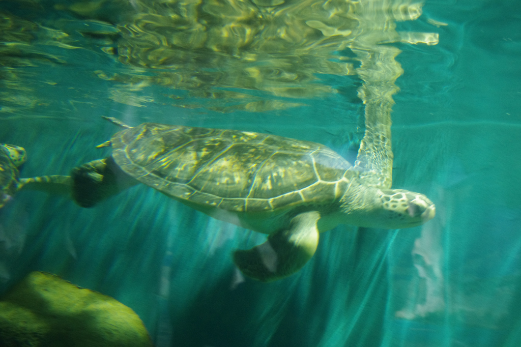可爱海底动物微信头像
