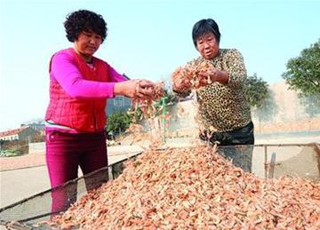 渔村年产海米200万斤 一户渔民一冬能赚5万元