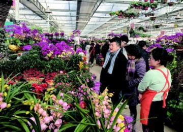 枯桃花卉交易中心上万种鲜花等您挑 想买趁早