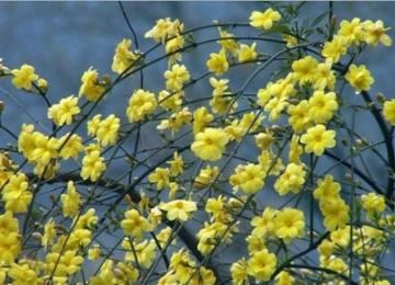 青岛即将进入赏花模式 今年首期花期预报发布