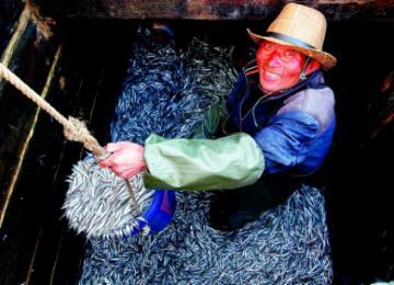 面条鱼正当时 青岛小港码头海鲜市场渔民忙