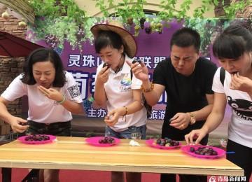灵珠山葡萄进入采摘季 门票60元持续至10月底