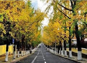 周二下雨加降温 青岛有望进入气象意义的秋天