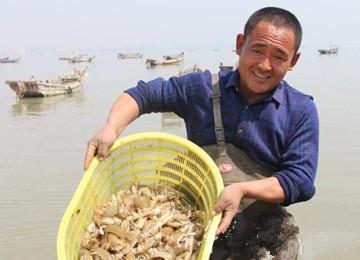 休渔期临近虾虎身价天天涨 渔民捞20斤上岸就被抢