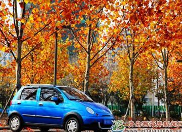 城市阳台枫叶正当红