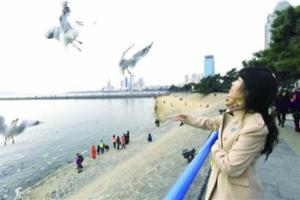 """冬季到青岛来""""鸥遇"""" 10万海鸥来青岛越冬"""