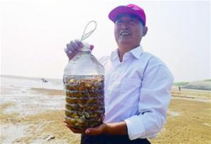 黄岛蛤蜊一小时挖七八斤 市民乐得合不拢嘴