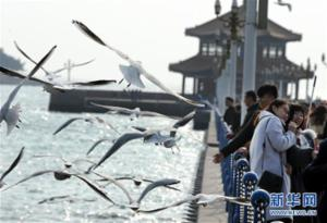 冬日栈桥观海鸥