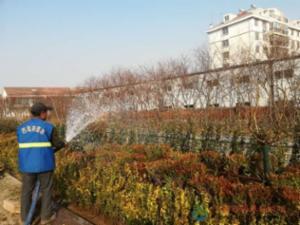 """浇灌""""越冬水"""",确保植物安全越冬"""