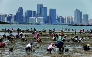 唐岛湾南岸海滩赶海忙 不少市民收获颇丰