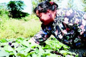 大沟村发展特色种植养殖 村民脱贫增收