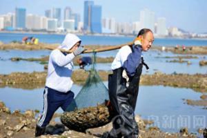 冬日去唐岛湾赶海 蛤蜊海蛎子一挖一麻袋