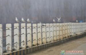 海鸥栖息渔业园区