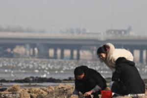 青岛:市民初春赶海尝鲜