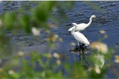 湿地生态美