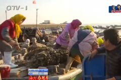 海蛎子正是肉肥味美时节