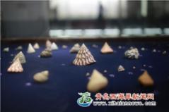 12000种贝壳 科普海洋4.5亿年