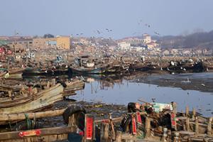 渔码头被海鸥霸占 千鸥齐飞场景壮观