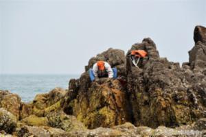 前海一线海蛎子日渐肥美 市民扎堆赶海