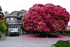 全球最美的17棵树