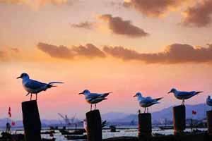 唐岛湾之美