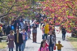 春花满校园