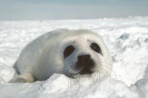 观鲸寻海豹