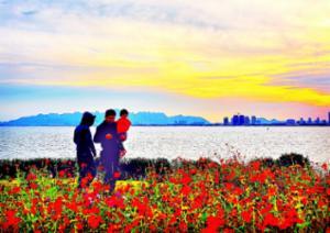 秋日赏红花