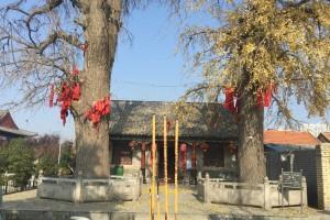 600岁城隍庙古银杏
