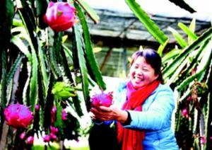特色水果生态园