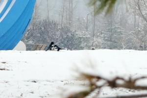 喜鹊雪中觅食