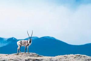 这里是青藏高原