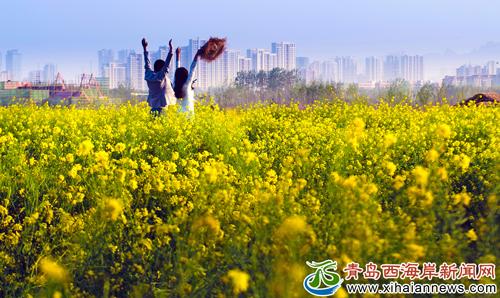 灵山花海绽放西海岸 生态观光园开启踏春赏花季-青岛
