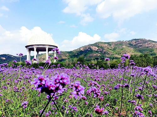 临港经济开发区辖内的青岛西海岸生态观光园和青岛香