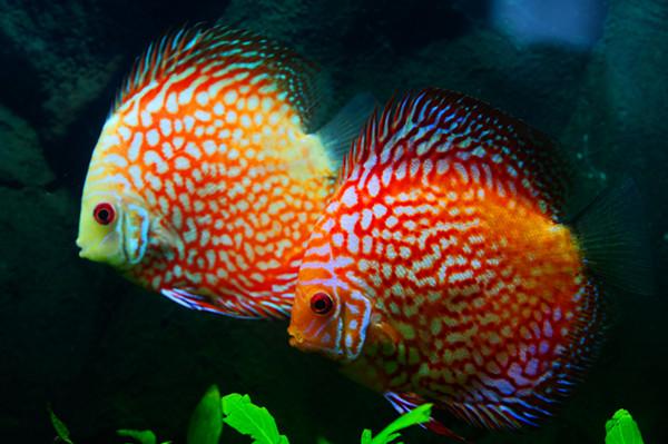 微信头像动物鱼