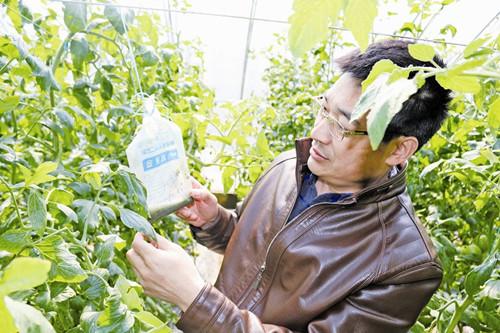 """农技人员为菜农""""传经送宝""""-青岛西海岸新闻网"""