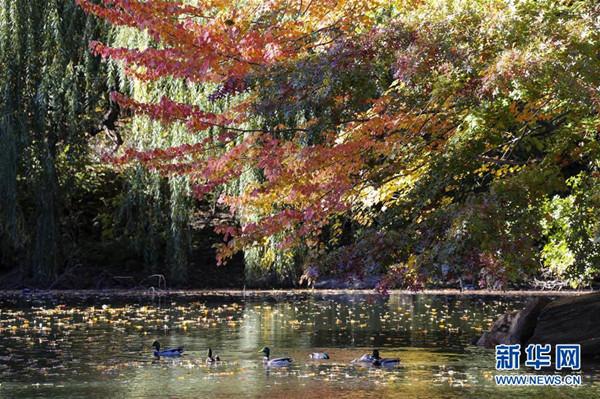 中央公园秋景如画-青岛西海岸新闻网