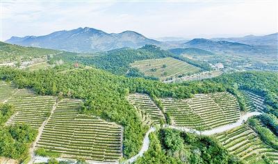 乡村振兴工作队来了 村里产业致富路宽了 1.jpg